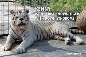 KennytheTiger IIIblog