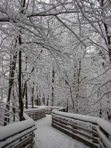 snow-1022667_1280